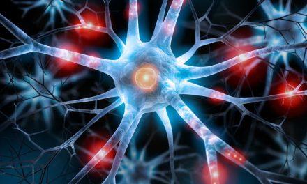 Neurogênese: minicérebro criado em laboratório liga-se à medula espinhal