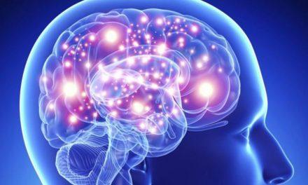 Bom para os idosos: produção de neurônios vai até os 97 anos