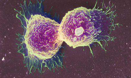 Em estudo composto que imobiliza célula do câncer
