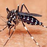 É hora de agir contra mosquito da dengue, zika e chikungunya