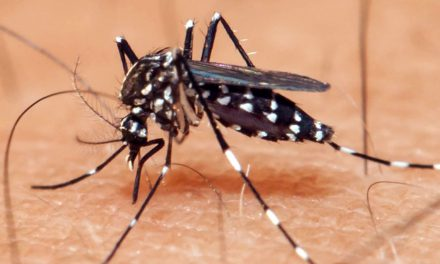 Atenção para o Aedes aegypti e febre amarela