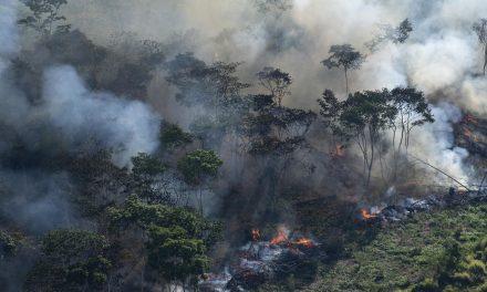 A destruição da natureza pode expor o homem a novas epidemias no mundo