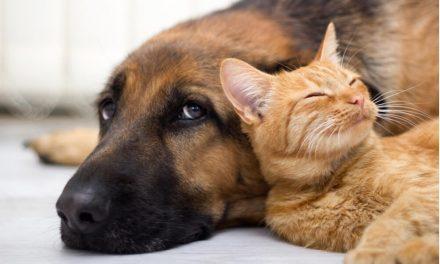 Fiocruz: Tutor pode infectar  cães e gatos pela Covid-19